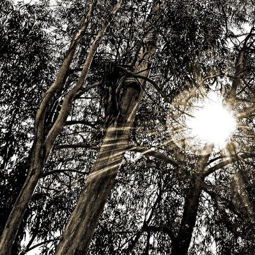 Lost on the woods 😁 Blackandwhite Bw Black White Bnw Mono Nb  Igersbnw Bw_lover Monochrome Bwoftheday Blancinegre Blancoynegro Byn Bwstyles_gf Bwbeauty Bandw Irox_bw Noir Noiretblanc Noirlovers Nero Ic_bw _bw Bw_society Monoart