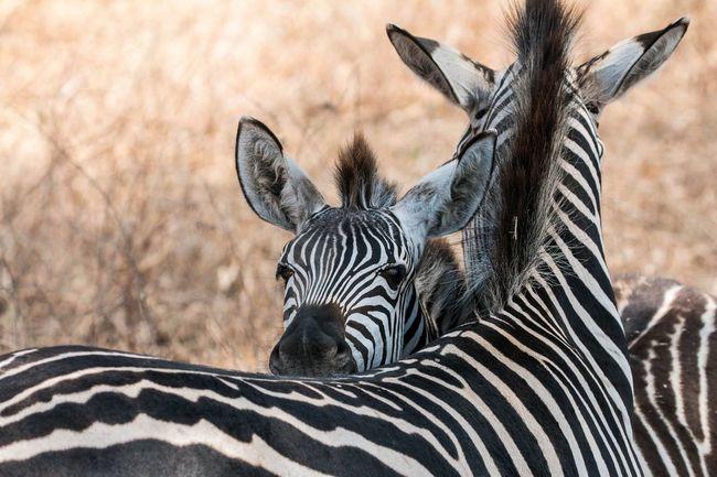 Tanzania Animals EyeEm Nature Lover Tarangire