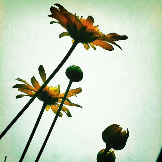 Snapseed Flower Yellowmagic 空