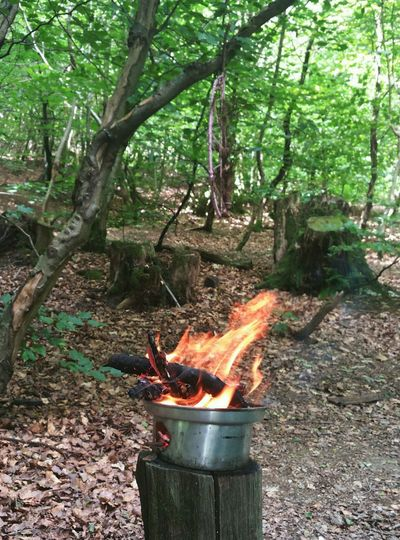 At a biodiversity workshop in the Woods (Tir Coed) today... Flame Trees Nature Naturaleza Wales Fire Mid Wales огонь костер пламя Лес Природа Llanidloes