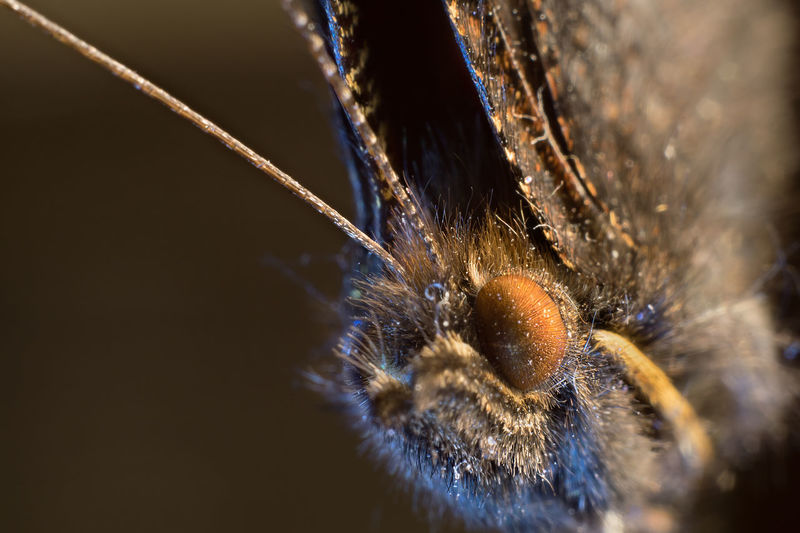 Animal Themes Animal Wildlife Animals In The Wild Close-up Day Insect Nature No People One Animal Outdoors Spider