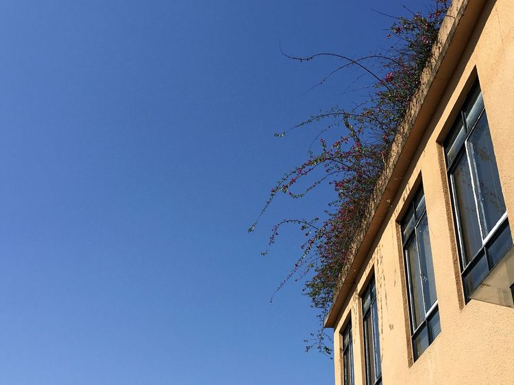 Blue Sky links to Imagination