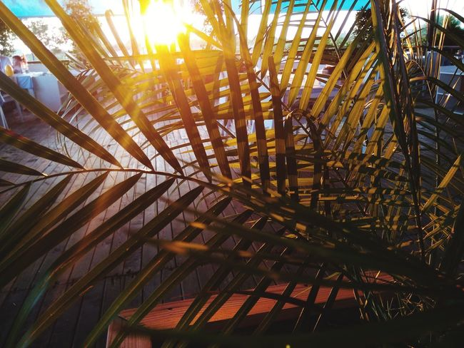 Sunset in summer Summer Sunset Summertime Palm Tree Sky Close-up Palm Leaf Shining Coconut Palm Tree Houseboat Tropical Tree Sunbeam Tall - High Sun Silhouette Tropical Climate Tahiti Dominican Republic