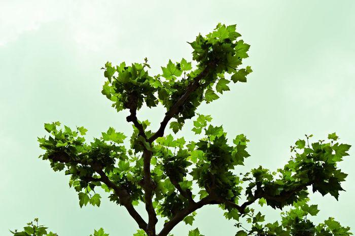 Tree Tree And Sky