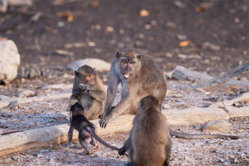 Monkey sitting on ground