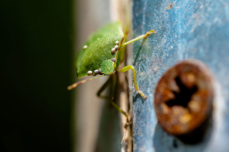 Close-up of green shield bug on metal