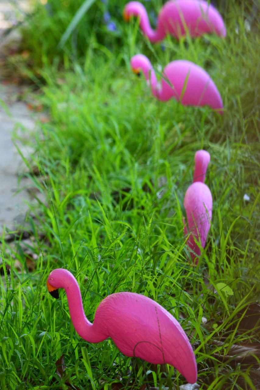 plant, grass, green color, pink color, nature, close-up, growth, day, animal, no people, animal themes, bird, beauty in nature, land, easter, vertebrate, field, focus on foreground, outdoors, flower, purple, toadstool