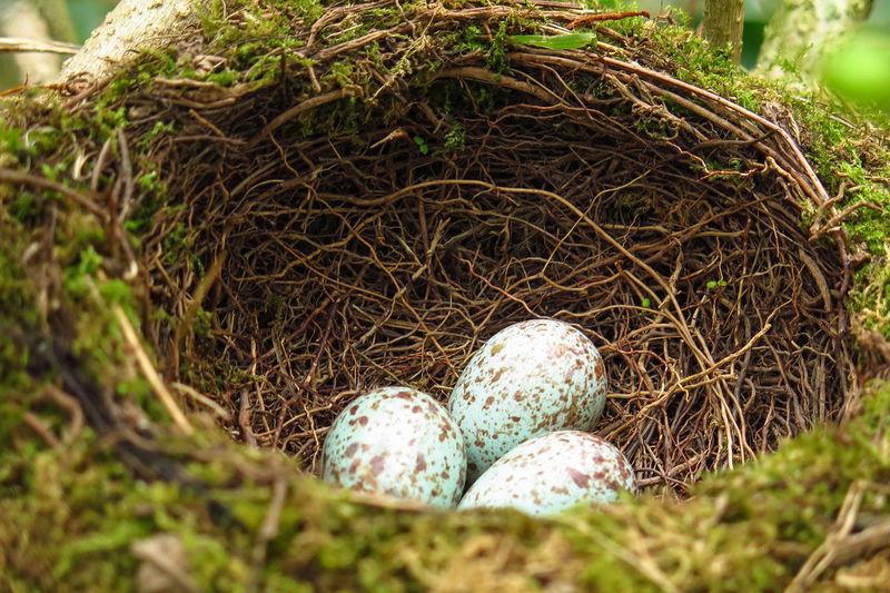 bird eggs @