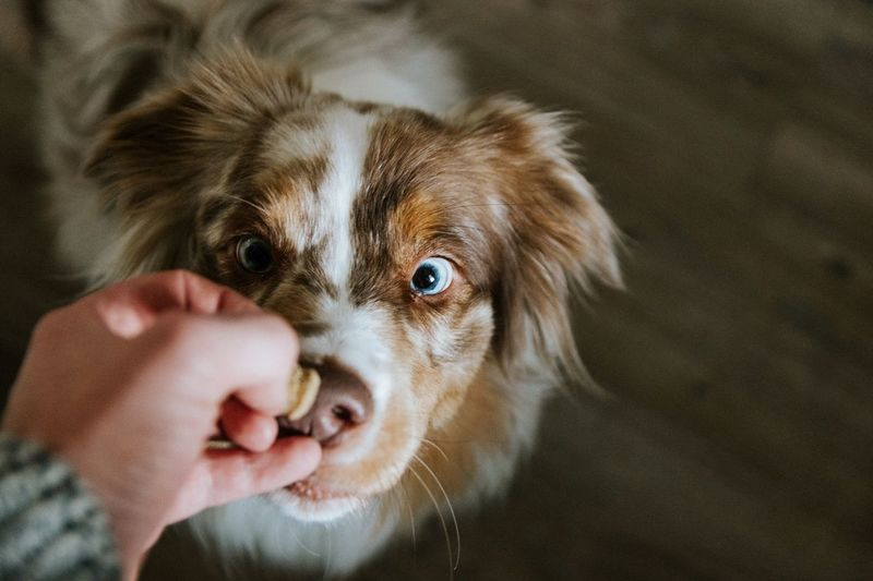 Close-up of person feeding dog