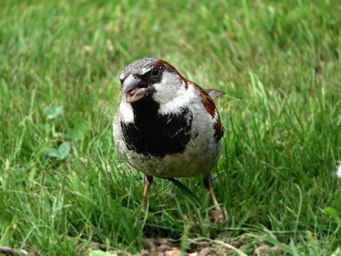 Close-up of a bird on grass