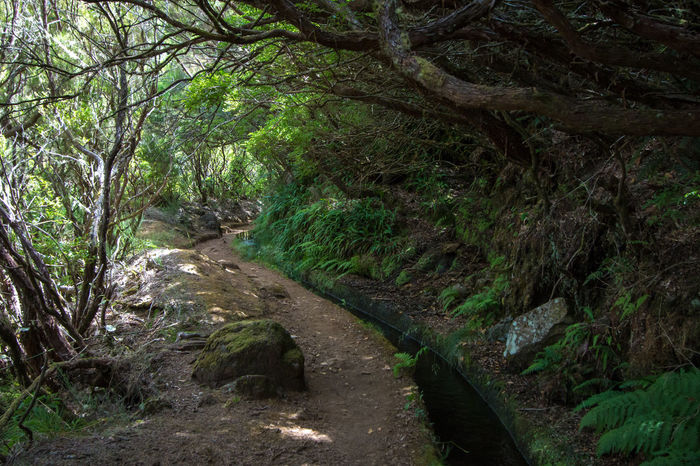 Landscape Levada Da Ribeira Grande Levada Walk Madeira Island Nature No People Outdoors Portugal Water Transport System Forest Ferns Lush Forest Foliage