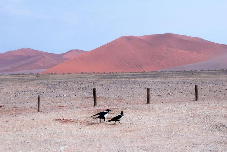 Bird on desert against mountain