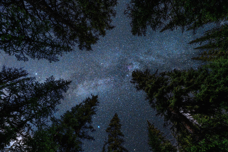 Low angle view of trees at night