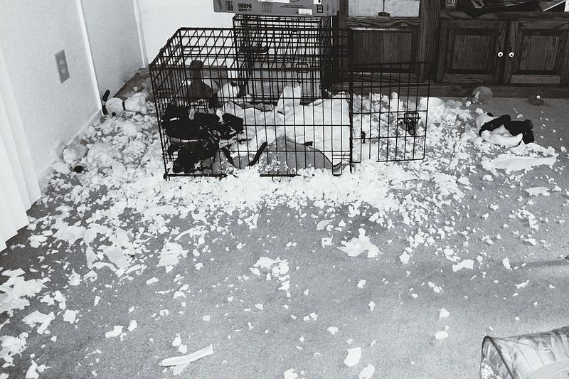 Doggydestruction Doglife Messyroom Crazypuppy Thatusedtobeabed Foamsnow