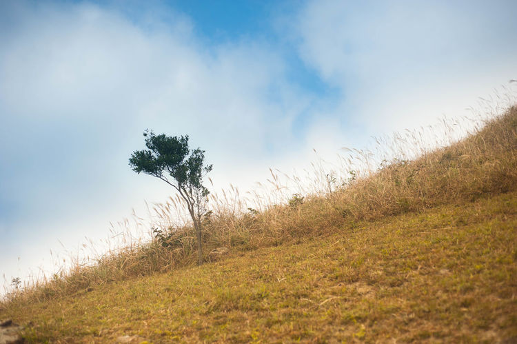 Tree Serenity Nature_collection Hiking Mountain Countryside Grass Outdoors Landscape Scenics Mountains Serenity Miscanthus No People Beauty In Nature Hill Blue Sky Clear Sky Blue Country Road Hong Kong Wind