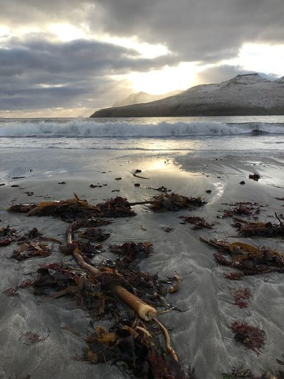 Seaweed goes to the beach Water Nature Seascape Seaweedwithaview