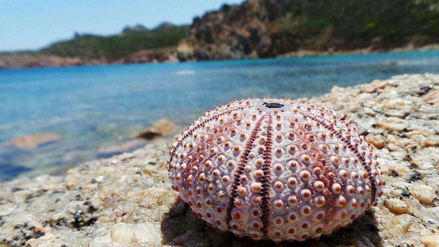 Close-up of sea urchin on rock