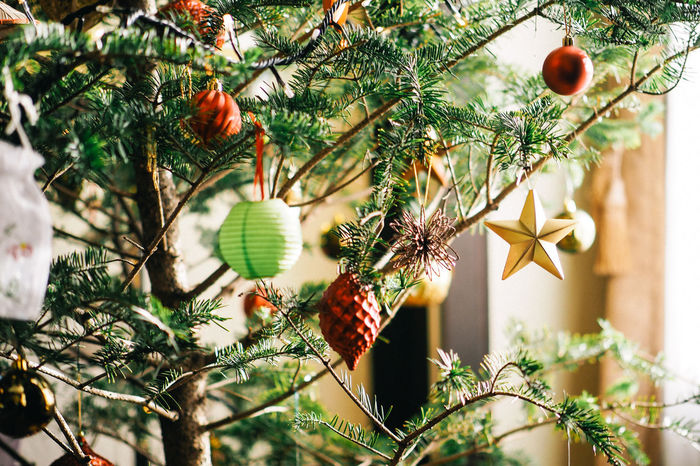 Close-up of Christmas Decorations on Tree Beauty In Nature Branch Bulb Celebration Christmas Christmas Decoration Christmas Ornament Christmas Tree Close-up Day Freshness Growth Hanging Interior Japan Low Angle View No People Paper Lantern Star Tree Yokohama