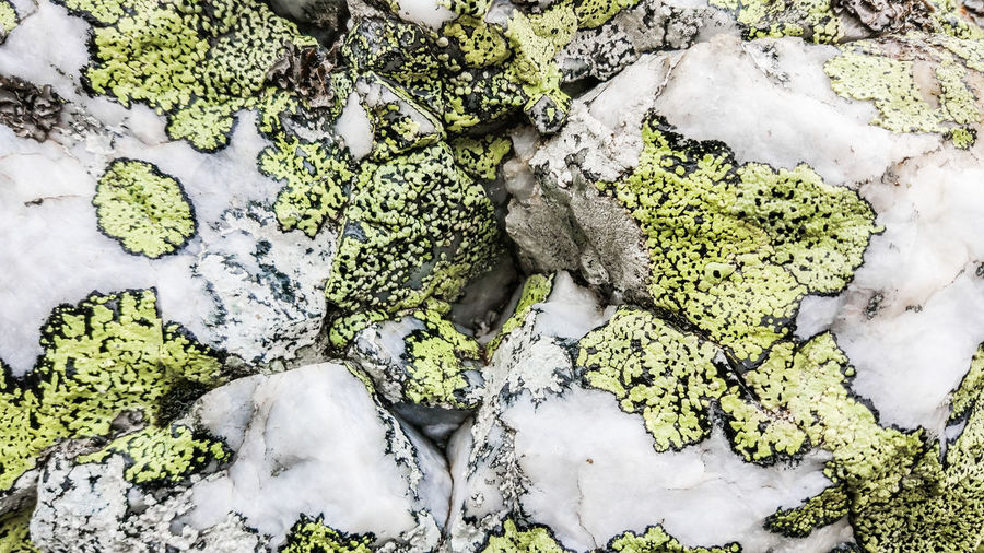 Some mossy stone. Beautiful, if you look closely. A good background for designers or just a picture for your desktop. Mossy Background Background Texture Backgrounds Beauty In Nature Cold Temperature Covering Day Directly Above Full Frame Green Color Growth High Angle View Leaf Lichen Moss Nature No People Outdoors Plant Plant Part Snow Stone White Color Winter