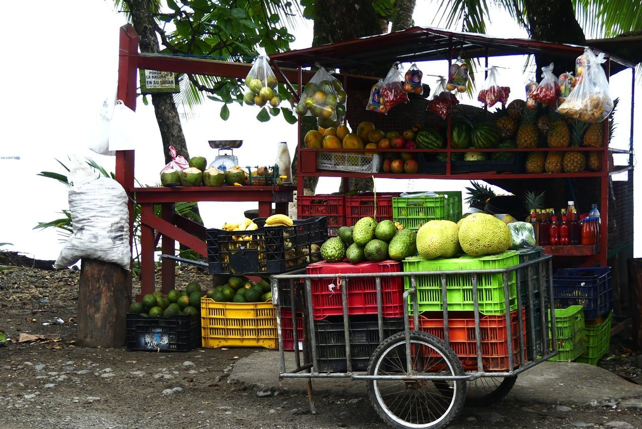 fruit, food, food and drink, day, outdoors, freshness, vegetable, healthy eating, choice, retail, market, no people, tree