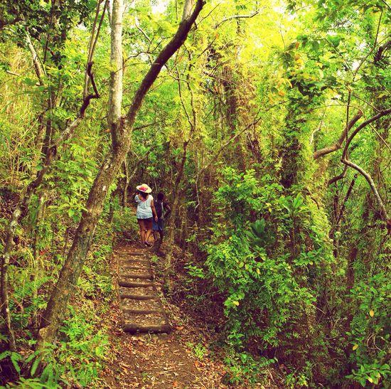 Birdwatching Check This Out Nature Photography Fiji Enjoying Life ListeningToTheEarth💙 Hello World