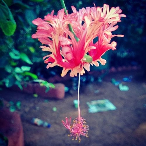 Shoe_flower Nokia  Lumia Lumia920 Nokia_camera Instanature Instaaddict Instalove Picoftheday Doubletap Followforfollow