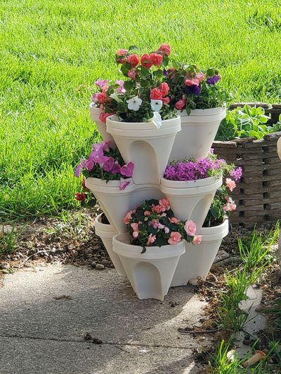 Potted plant on flower pot