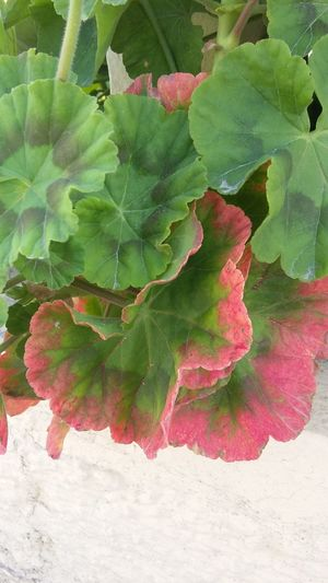 Plants 🌱 Pink Leaves Green Green Green!  Nature Photography Taking Photos Check This Out