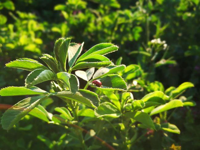 Nature Spring Ladybug