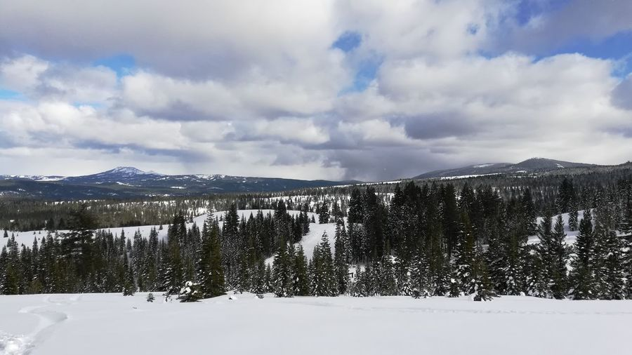 View from Johnsville Ski Resort Mountain Snow Cold Temperature Tree Winter Pinaceae Pine Tree Sky Landscape Mountain Range Snowcapped Mountain Frozen Snowcapped Deep Snow WoodLand First Eyeem Photo