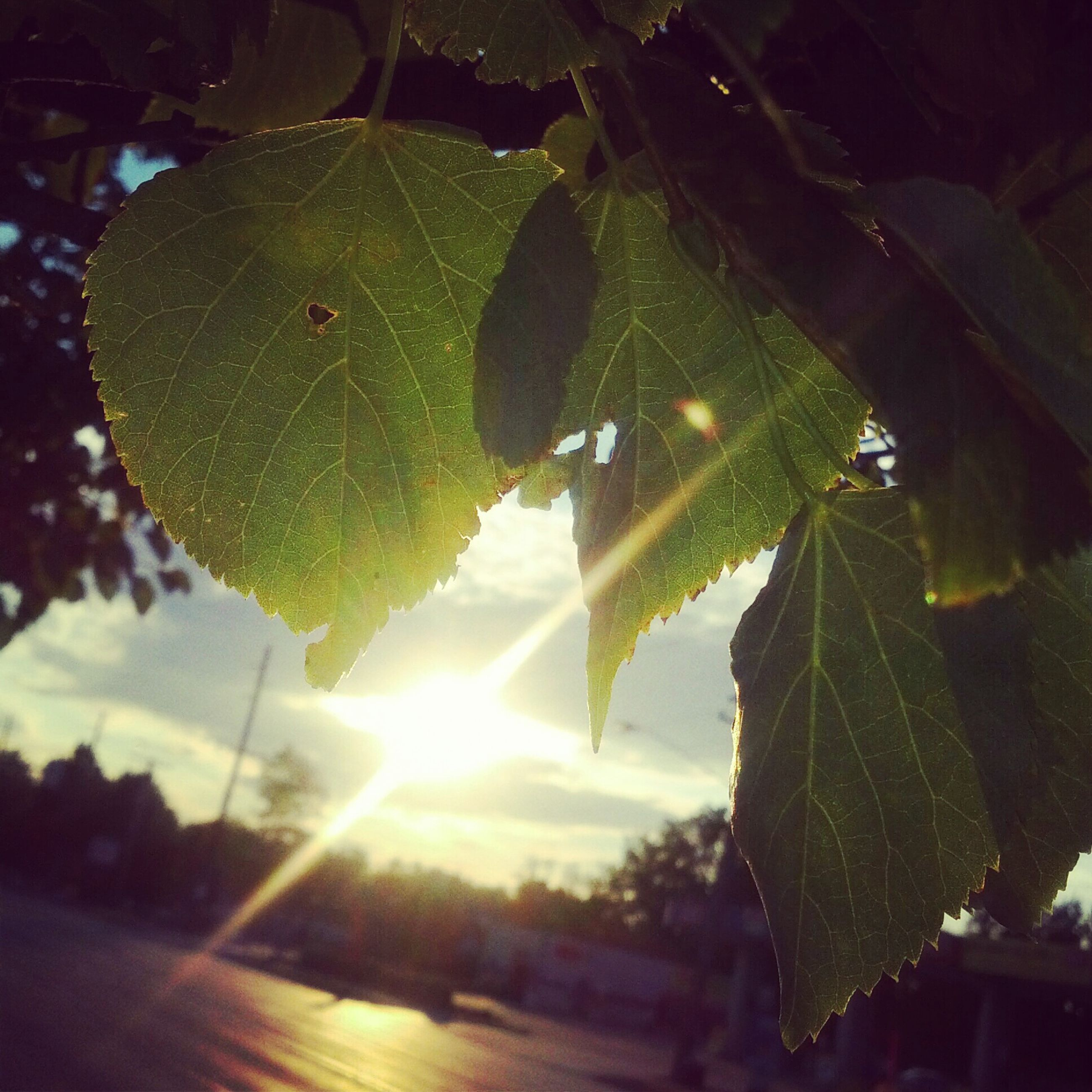 leaf, sun, sunbeam, sunlight, lens flare, nature, growth, green color, tree, close-up, leaf vein, beauty in nature, tranquility, no people, day, outdoors, plant, sunny, sky, focus on foreground