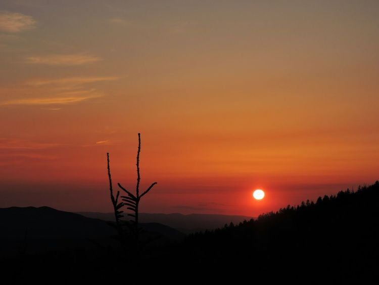 Smoky Mountain Sunset Red Sky and Spruce Treetop Silhouette . Clingmans Dome Overlook , Great Smoky Mountains National Park , Tennessee