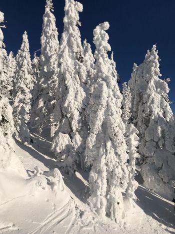Bayerischer Wald Snow Winter Cold Temperature Nature Beauty In Nature Frozen Sunlight