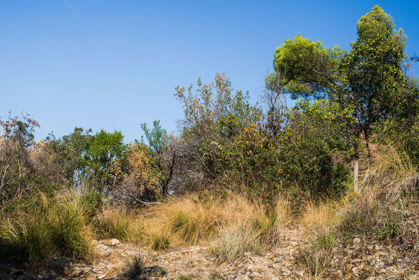 Grass Hiking Portofino Natural Regional Park Portofino Promontory Trekking Adventure Blue Clear Sky Day Dry Grass Forest Growth Landscape Mountains Nature No People Outdoors Plant Scenics Sky Tourism Tranquil Scene Tranquility Tree Woods