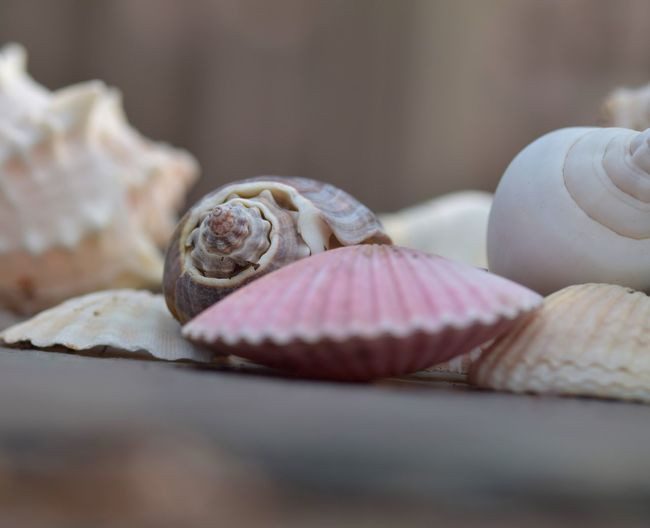 Close-up of seashell on table