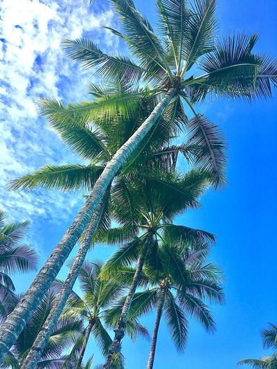 Another day of sun🌴 Palm Tree Low Angle View Clear Sky Bluesky Summer Summerforever Portdouglas Australia