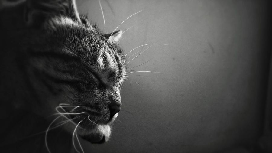 Close-Up Of Cat Against Wall