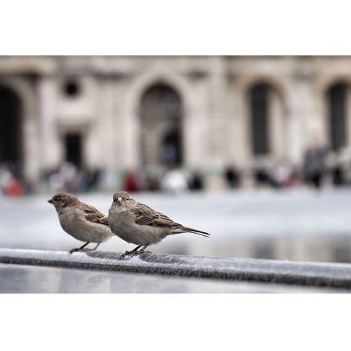 Pigeon perching on railing
