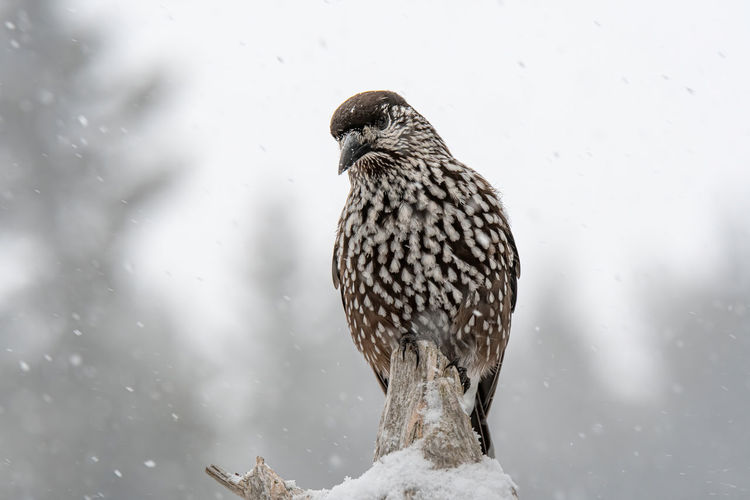 Close-up of bird perching on tree during winter
