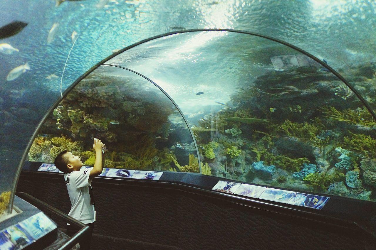 Boy photographing in aquarium