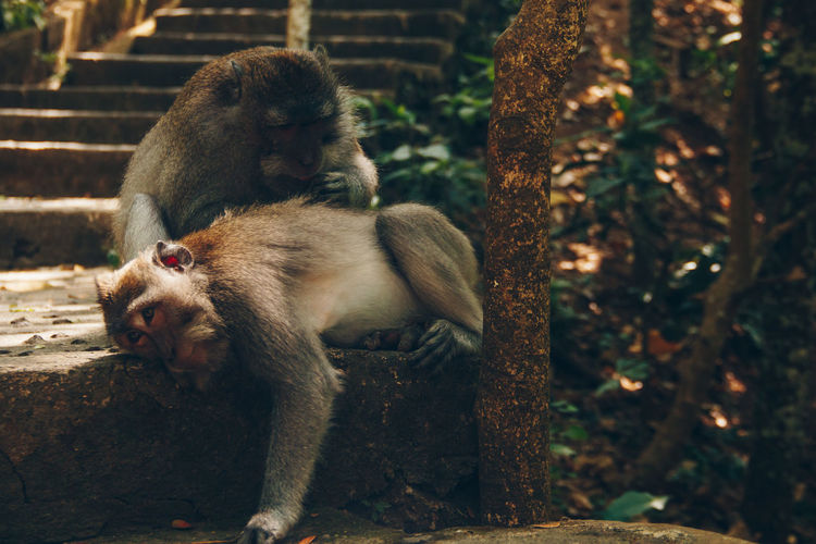 Animal Themes Animal Wildlife Animals In The Wild Day Mammal Monkey Nature No People Outdoors Togetherness Two Animals Young Animal
