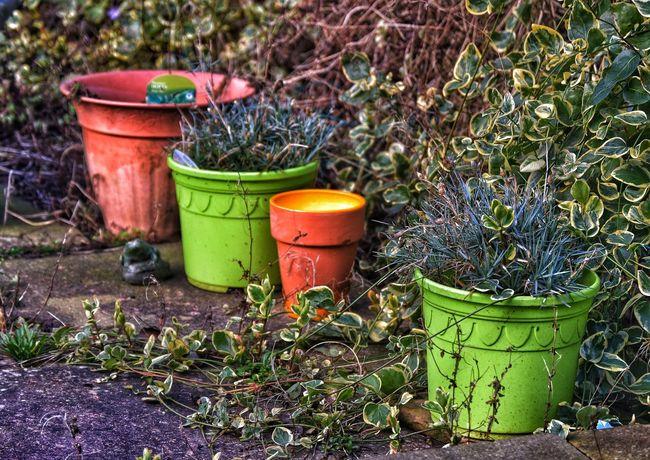 Winter Winter Garden Plants