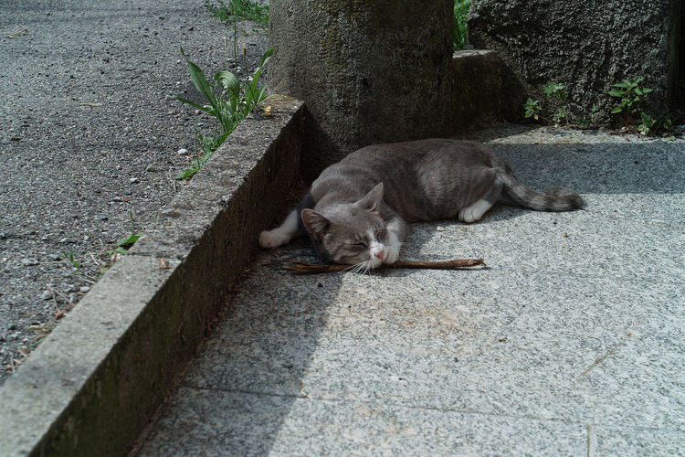 High angle view of cat sleeping on footpath