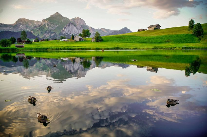 heaven on earth, one Reflection Water Scenics - Nature Lake Beauty In Nature Sky Mountain Landscape Tranquility Nature Tranquil Scene Cloud - Sky Animal Animal Themes Reflection Lake