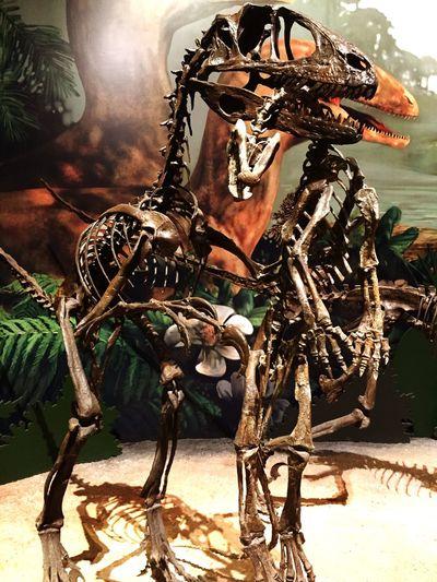 Museum Dinosaur Sam Nobel Okc Check This Out