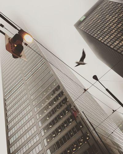 Fog + Bird