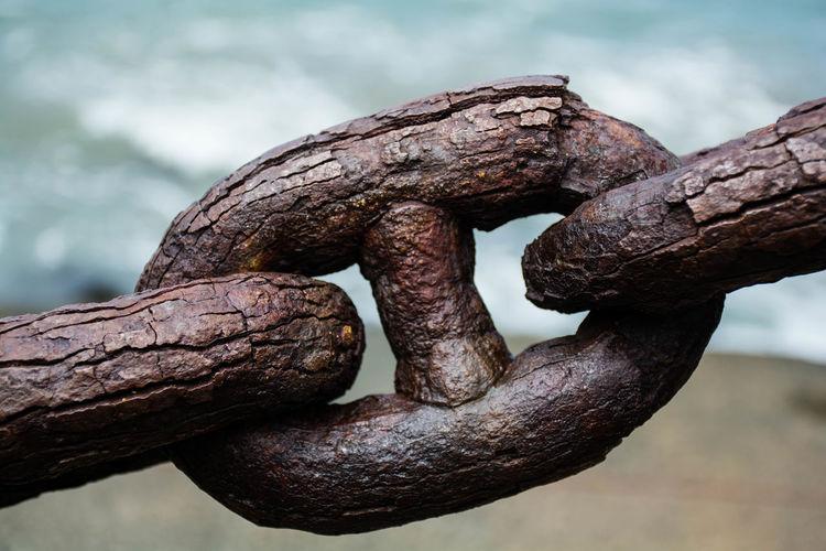 Guarding the Bridge Chain Delicate Goldengate GoldenGateBridge Ocean Old Rust Sea