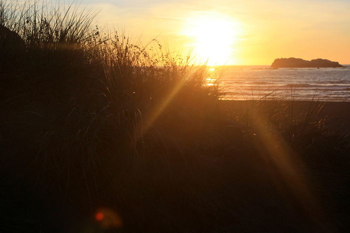Sunset in the Sand Dunes of Trinidad beach, California Beach Beauty In Nature Day Grass Lens Flare Nature No People Orange Glow Outdoors Sand Dune Scenics Sea Silhouette Sky Sun Sunlight Sunset Tranquil Scene Tranquility Tree Water