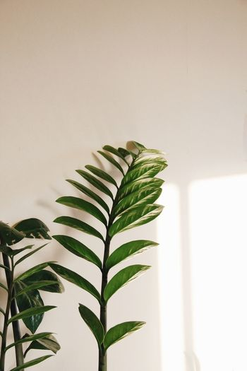 House plants Leaf Plant Part Growth Plant Green Color Nature Wall - Building Feature Palm Tree Natural Pattern Tree Frond Palm Leaf Day Fern Beauty In Nature Copy Space Leaves Indoors  No People Close-up