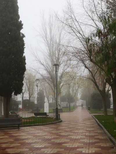 On Sale Cordoba Spain 17.62° Tree Park - Man Made Space Spraying Branch Autumn Water Fog City Sky Grass Snowfall Snowing Blizzard Snowflake Cold Frost Ice Crystal Snow Covered